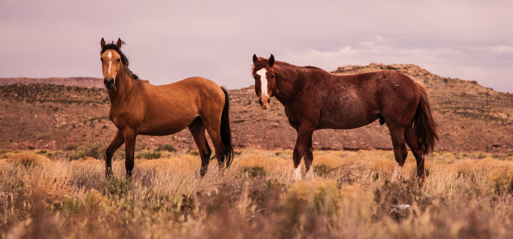 Two horses of different shades of brown with white noses stand in a field of long grasses in front of rock formation