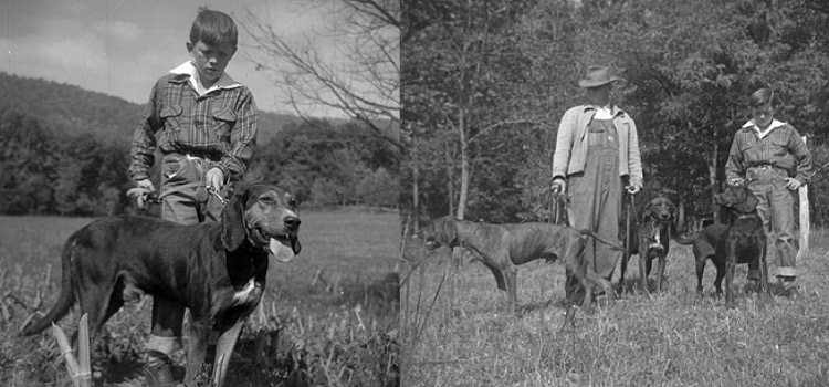 Vintage black and white photos of a father and son hunting with their 3 Plott Hounds in the woods in North Carolina